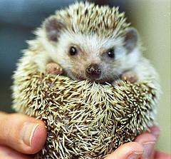 Ubuntu_5.04_Hoary_Hedgehog_